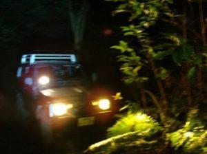 夜はジャングル